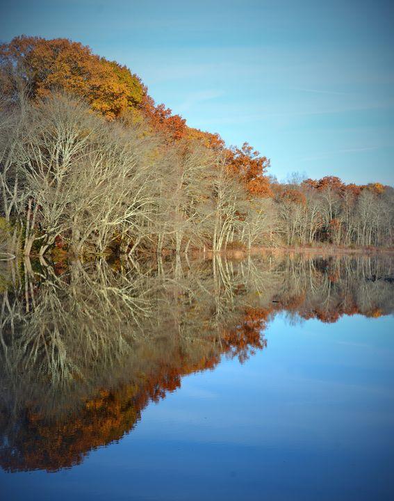 Reflecting Trees - NatureBabe Photos
