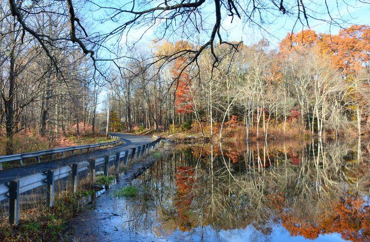 Roadside Reflections - NatureBabe Photos