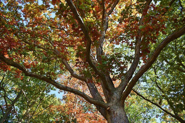 Under the Oak Canopy - NatureBabe Photos