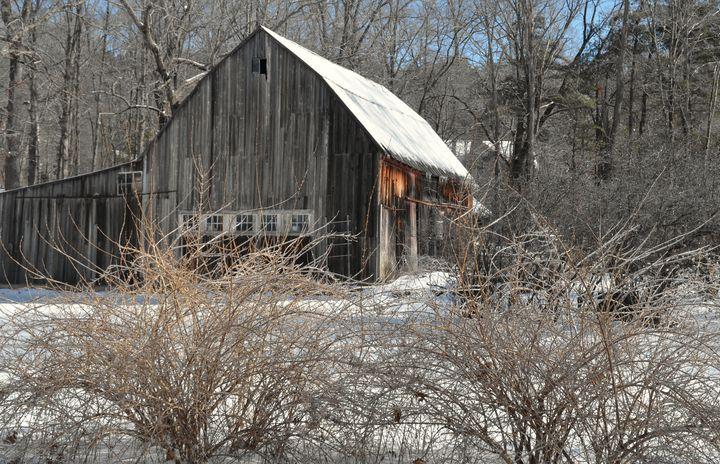January in Woodbury - NatureBabe Photos