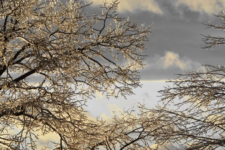 Where Treetops Glisten - NatureBabe Photos