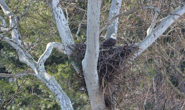 Nesting Time - NatureBabe Photos