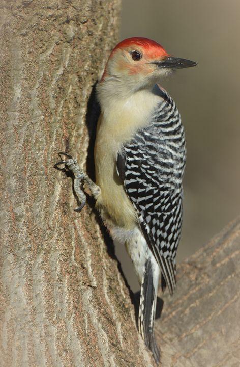 Tree Hugger - NatureBabe Photos