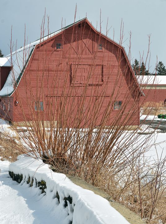 Country Barn in Winter - NatureBabe Photos