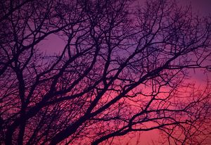 Pink and Purple Sunset Hues