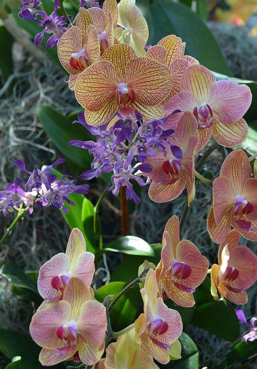 Orchids - NatureBabe Photos