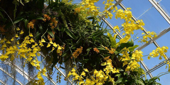 New York Botanical Gardens - NatureBabe Photos