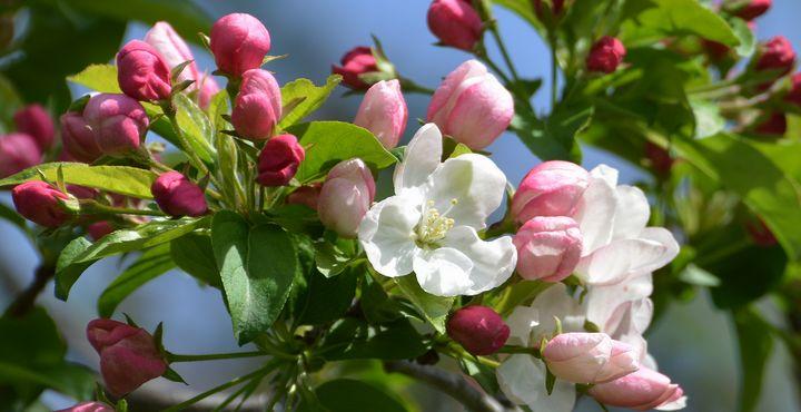 Sign of Spring - NatureBabe Photos