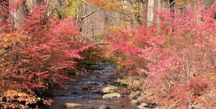 Creekside Winged Burning Bush - NatureBabe Photos