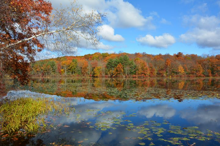 Long Meadow Pond in October - NatureBabe Photos