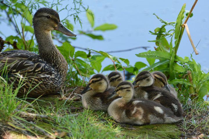 Motherhood - NatureBabe Photos