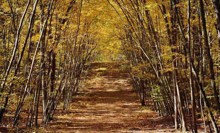 Petie's Pathway - NatureBabe Photos