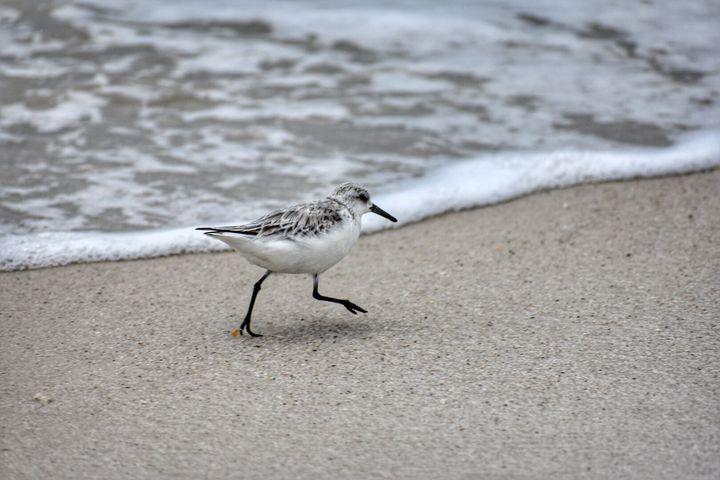 A bird on the beach - SBone