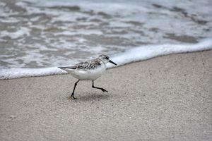 A bird on the beach