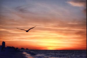 Gulf Shore - SBone