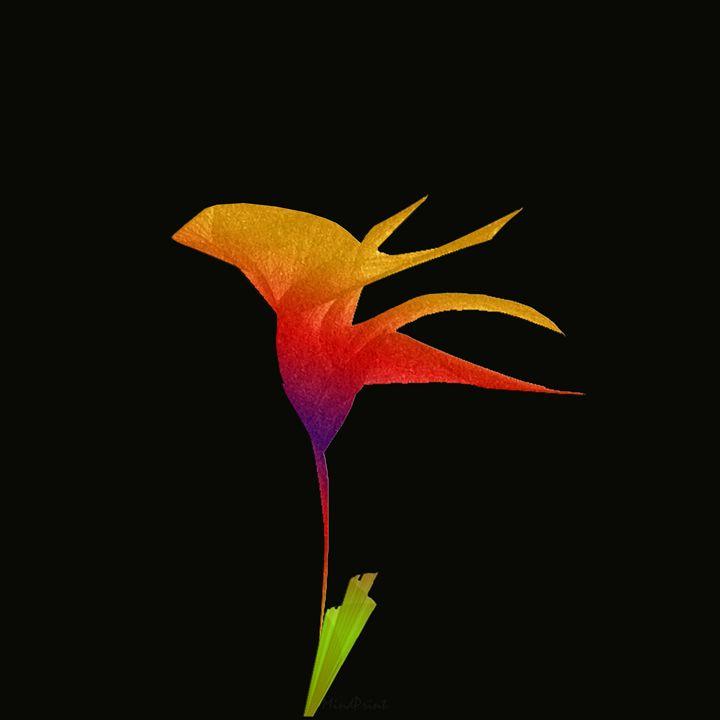 Bloom - Monolova