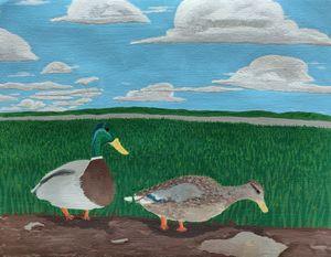 Wetland Ducks