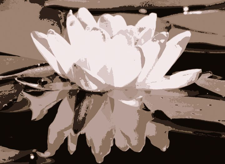 Water lilies 5 - Anetart Aneta Srodon
