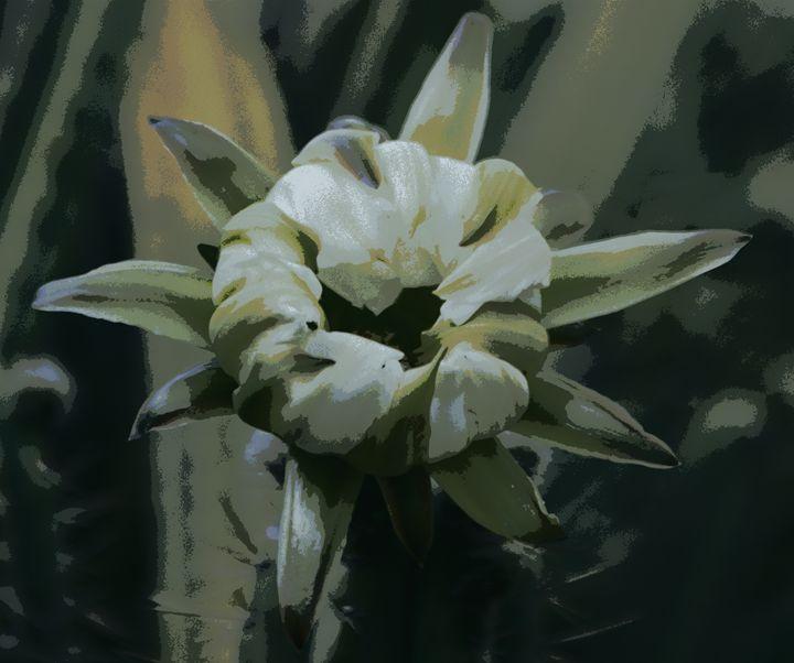 Flower 6 - Anetart Aneta Srodon