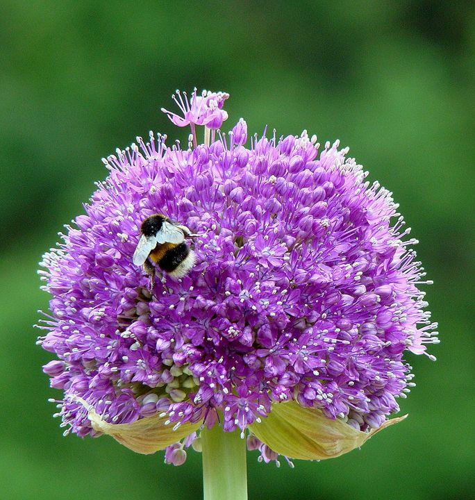 Flower 12 - Anetart Aneta Srodon