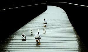 Ducks - Anetart Aneta Srodon
