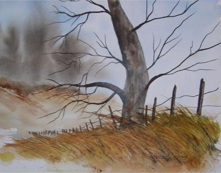 The Old Tree - Robyn Q. F.