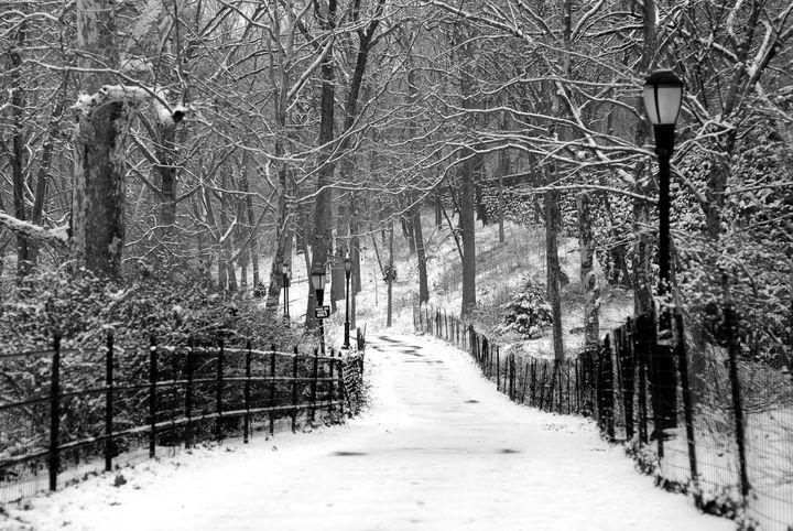 Snowy Path - NAJE Foto