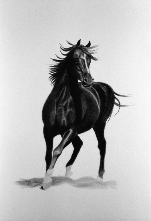 black horse - charcoalchet's portraits