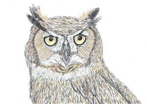 Owl Pen Drawing