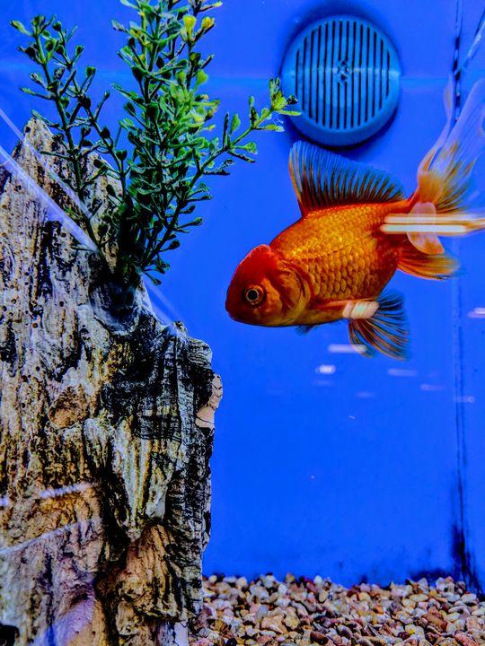 Fishy - Madison