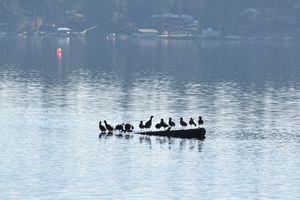 Birds on a log - Ngtimages