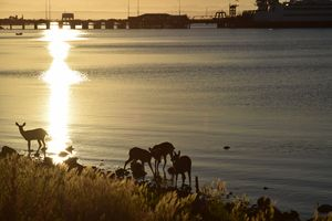 Deers at the beach