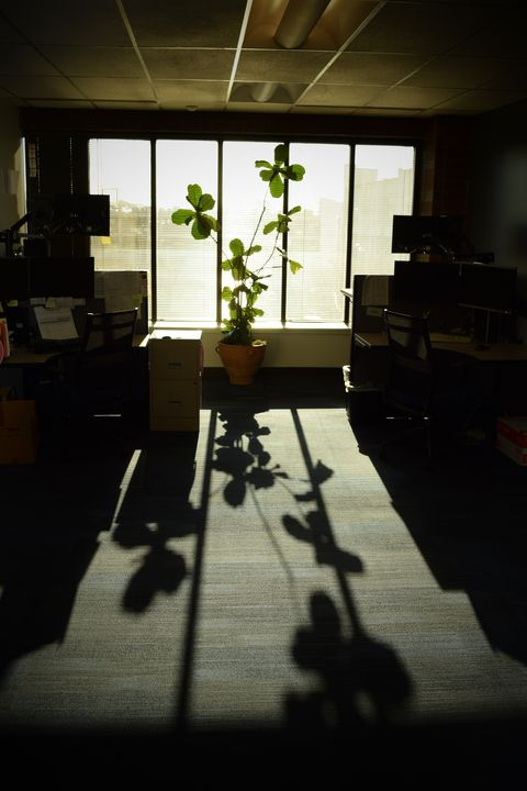 Office plant - Ngtimages