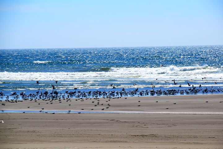 Bird beach - Ngtimages