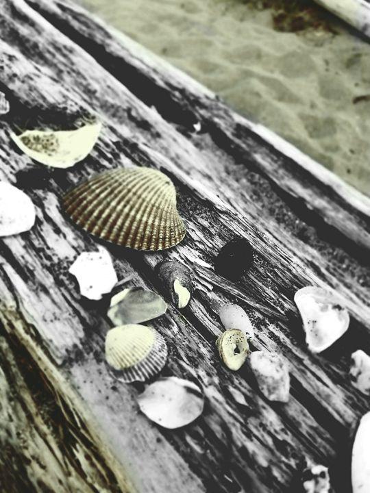 Seashells - Ngtimages