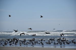 Birds at the beach - Ngtimages