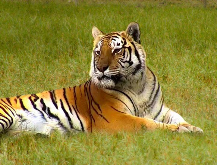 Lying tiger - GuarDi-Art