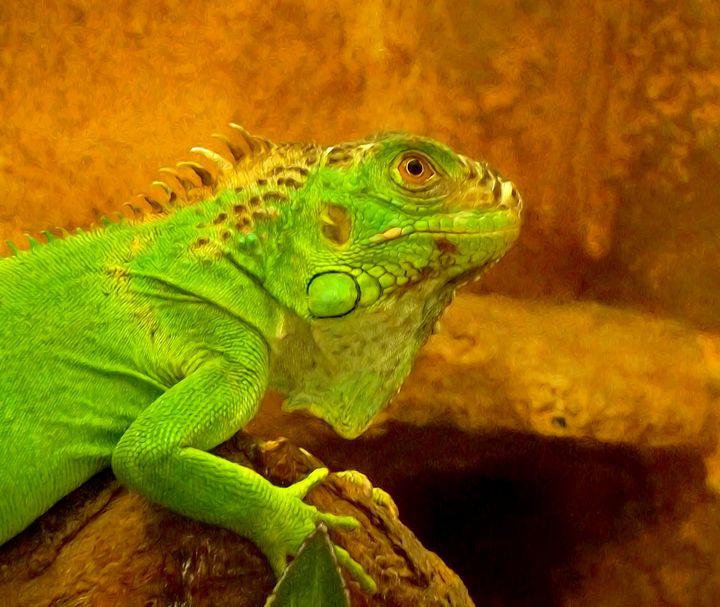 Green iguana - GuarDi-Art