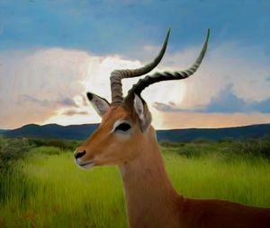 Antelope portrait