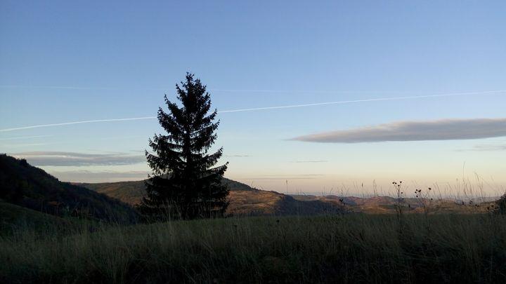 lone pine - atelje lerok
