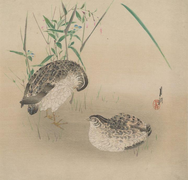 Ogata Gekkō~Quails - Old classic art
