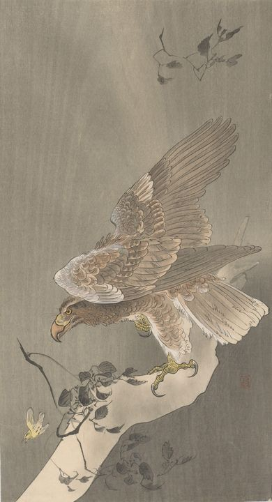 Ohara Koson~Eagle with spread wings - Old classic art