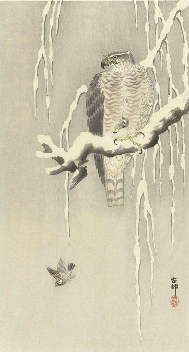 Ohara Koson~Havik met gevangen ringm - Old classic art