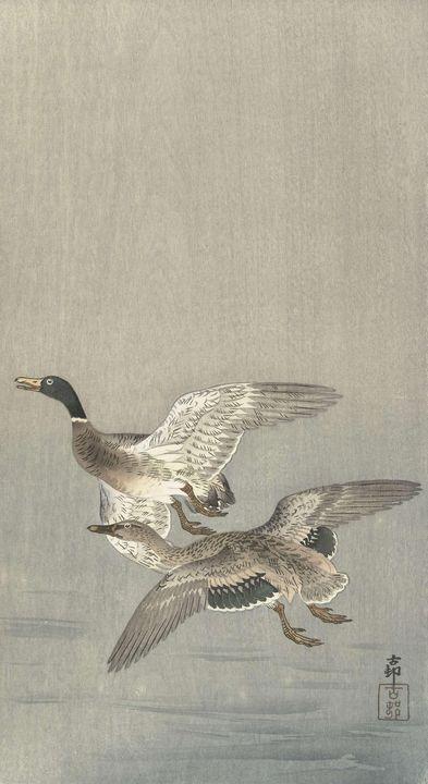 Ohara Koson~Koppel eenden - Old classic art