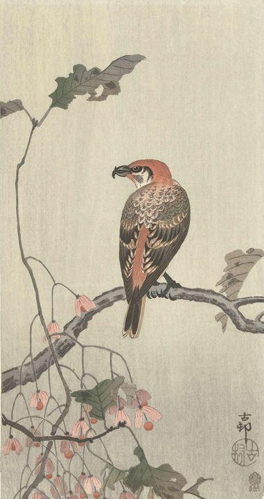 Ohara Koson~Kruisbek op boomtak - Old classic art