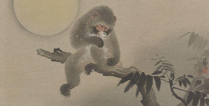 Ohara Koson~Monkey on bough - Old classic art