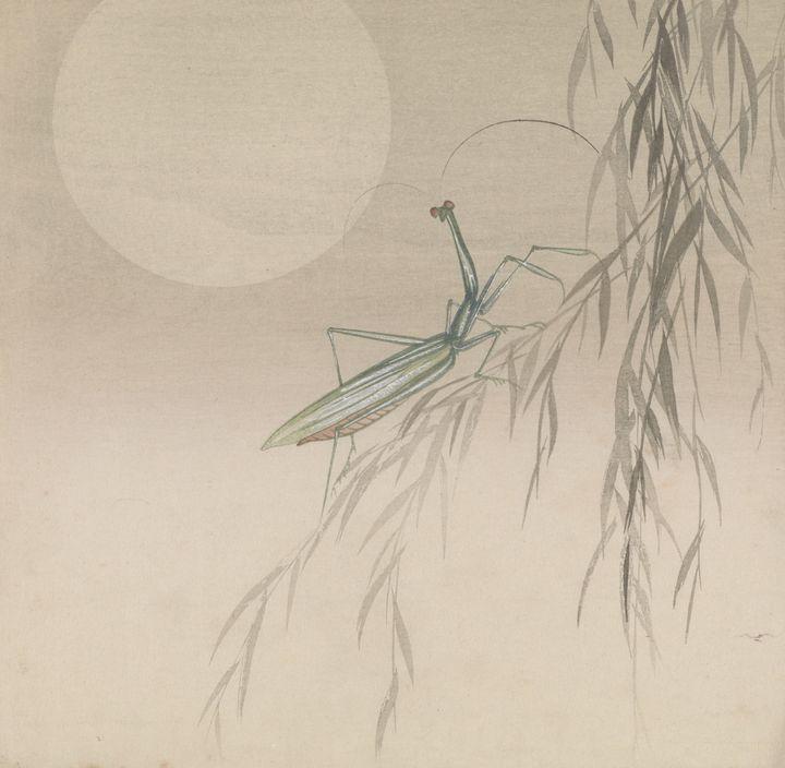 Ohara Koson~Praying mantis on a will - Old classic art