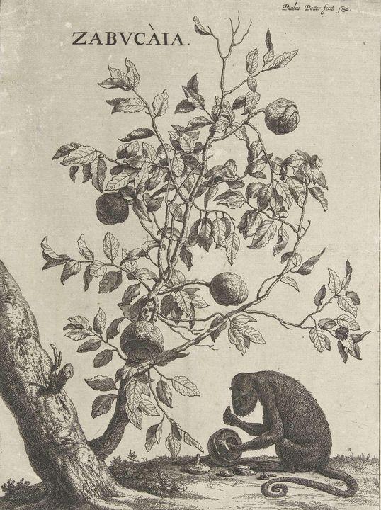 Paulus Potter~Zabucaiaboom en een aa - Old classic art
