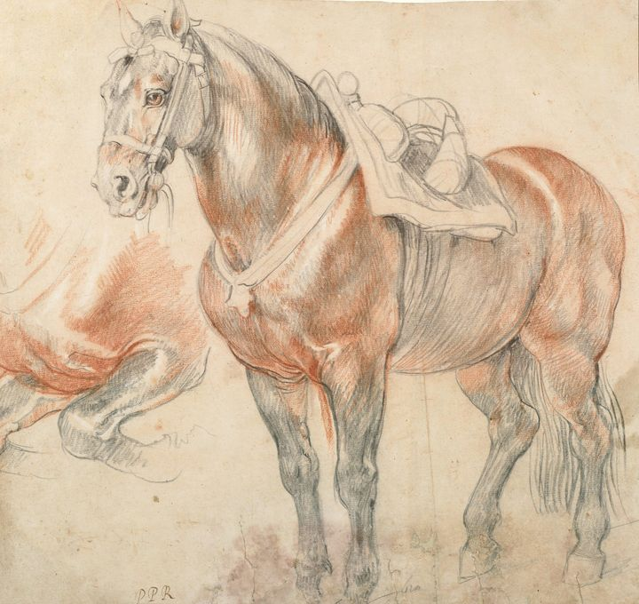 Peter Paul Rubens~Saddled Horse, C. - Old classic art