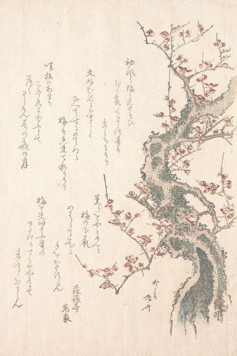 Ryūryūkyo Shinsai~『春雨集』 摺物帖柳々居辰斎画 紅梅 - Old classic art